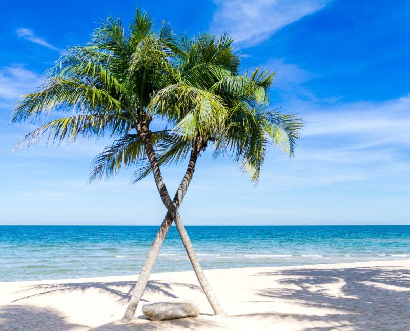 ben-gordon-palm